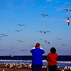 Mar 19<br /> Enjoying the show<br /> <br /> The seagulls gave a great aerial show for pedestrians on the beach!<br /> <br /> Thanks for enjoying my macro shot yesterday!