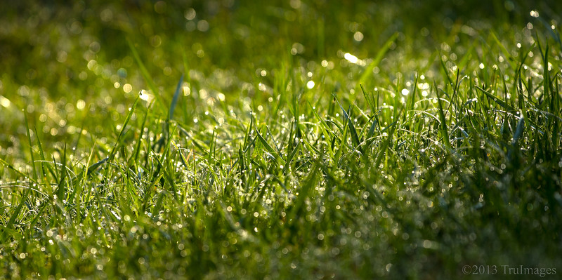 Oct 1<br /> Morning dew<br /> <br /> Each morning I open the front door to see what photo ops await me. On this particular morning, the sunlight glistening on the grass caught my eye!<br /> <br /> Thanks for your continued support and comments on my work! I am inspired and humbled by all of you!