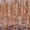 Jan 29<br /> Trees in ice<br /> <br /> Another shot similar to yesterdays but a different location. This area had more solid ice..burr! This was taken on Saturday. Its supposed to be 70 today!<br /> <br /> Thanks for viewing and commenting!