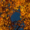 Nov 8<br /> Autumn Abstract<br /> <br /> My favorite fall color combination, yellow and blue! It always brings a smile to my face to see golden leaves in golden light!<br /> Happy Friday!