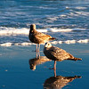 Feb 8<br /> Just the 4 of us<br /> <br /> Happy Friday!! For fellow smuggers in the path of winter storm Nemo, just pretend you are these guys, hanging out on the beach, in the warmth of the evening sun! Good luck to all of you! Best viewed in X3!<br /> <br /> Thanks for your comments and critiques!!