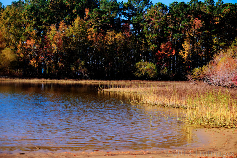 Nov 21<br /> Fall at lake's edge<br /> <br /> A glorious fall morning at a shallow area of Jordan lake.<br /> <br /> Thanks for viewing and commenting. I've been super busy at work and have had a hard time keeping up with commenting. Will try to catch up soon!
