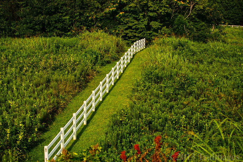 Aug 14<br /> The fence<br /> <br /> I saw this fence in the middle of this field during a drive through the country. I'm not sure what purpose it serves, but I liked the contrast of the white against the sea of greenery!<br /> <br /> Thanks SO much for hunting down my photos and continuing to comment in spite of the DC troubles. You guys are AWESOME!! I am trying to keep up as well, and if I've missed yours please let me know!