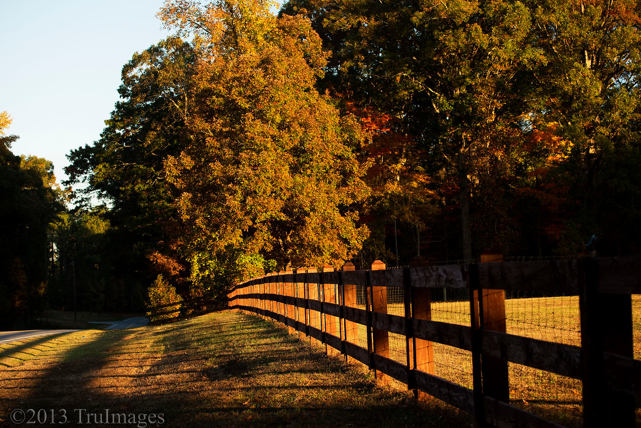 Nov 6<br /> Autumn morning<br /> <br /> Early Sunday morning after photographing the partial eclipse, I noticed how beautiful and golden the world looked! Maybe I should get up before sunrise more often!<br /> <br /> Thanks for your wonderful comments on yesterday's shot. You guys keep me inspired!