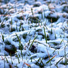 Jan 24<br /> A bit of snow on the lawn from our little snow shower last week. Another wintry mix expected for tomorrow, and a few days later back to the 60's... typical North Carolina weather!<br /> <br /> Thanks for viewing and commenting!!
