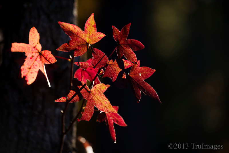 Nov 13<br /> Red leaf bouquet<br /> <br /> I love the beautiful color that fall brings! Photo opportunities are abundant as the ordinary becomes spectacular!