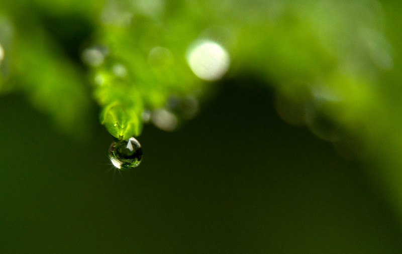 Jul 19<br /> Sparkling droplet<br /> <br /> A bit of  sparkle for your Friday! <br /> Happy Friday everyone!
