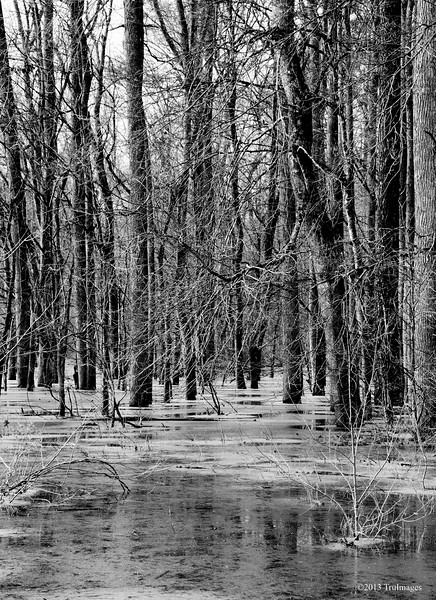 Jan 28<br /> Frozen marsh<br /> <br /> Its cold in the south!! These trees are standing in frozen water!  Winter has arrived. Best viewed in size X2.<br /> <br /> Thanks for your interesting comments on the melting ice shot yesterday
