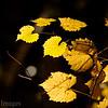 Hues of Gold