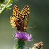 Butterfly glow