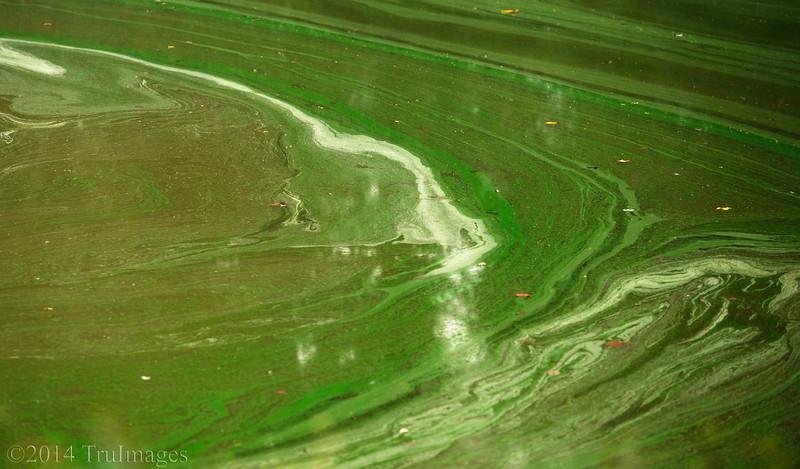 Abstract, green swirls