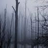 Mar 4 Haunted swamp  While taking this photo i expected some osrt of swamp maonster to emerge from the murkey waters!