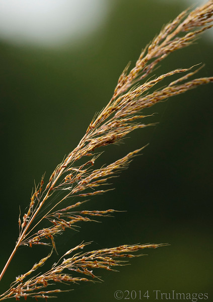 Grasses of autumn
