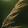 Grasses of autumn