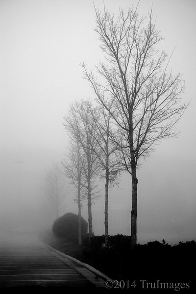 Jan 15<br /> Trees in the mist<br /> <br /> A foggy morning always bring exciting photo opportunities, although i had to climb out of bed earlier than usual this morning!