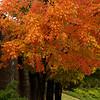 50 Shades of Fall
