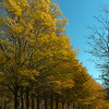Golden trees