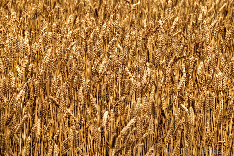 Amber grains