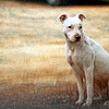 Jan 3<br /> Pooch Portrait<br /> <br /> This friendly pooch was hanging out in the yard of a friend, waiting to greet visitors!