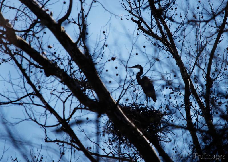 Nest in the sky