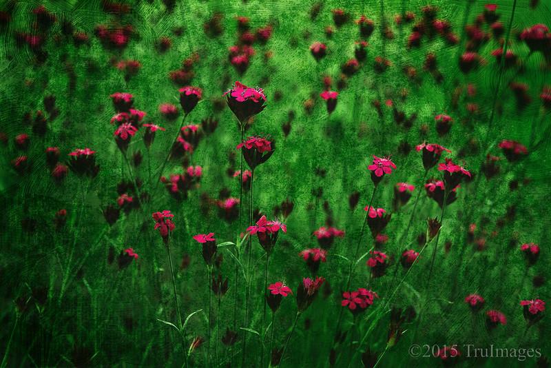 Mini Flowers Canvas