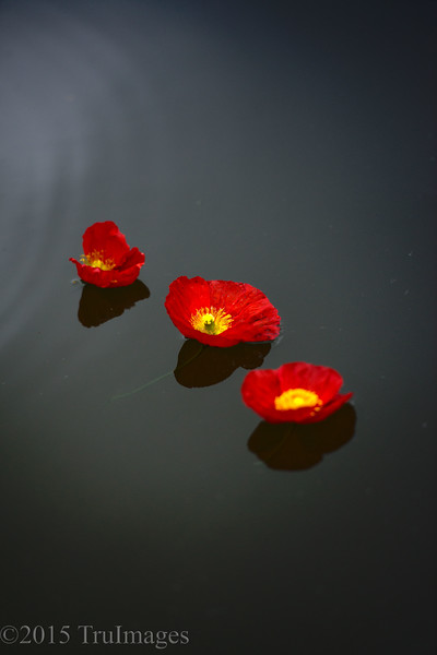 Floating Reds