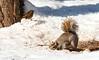 Snow Frolics