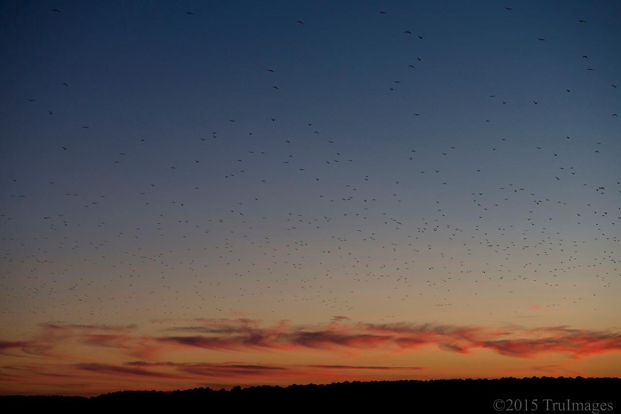 Sunset Migration
