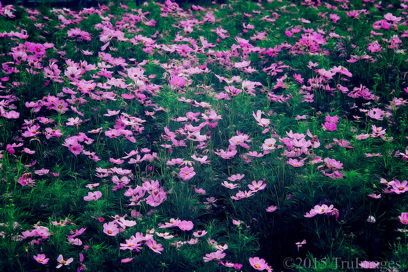 Cosmos Forest