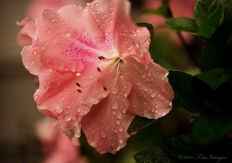 Pink Droplets