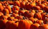Home of the Pumpkin Piper