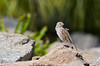 Bird on the Rocks