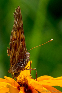 Butterfly Pov