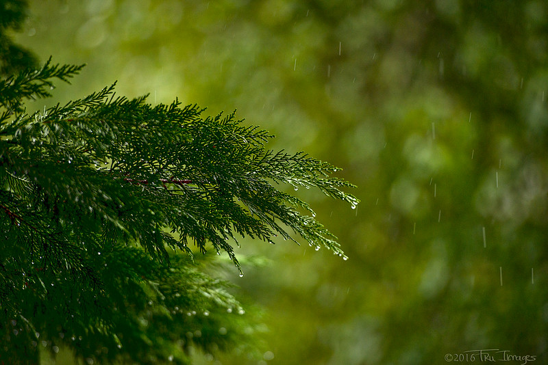 Raindrops keep falling.....
