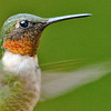 Portrait of a Hummer