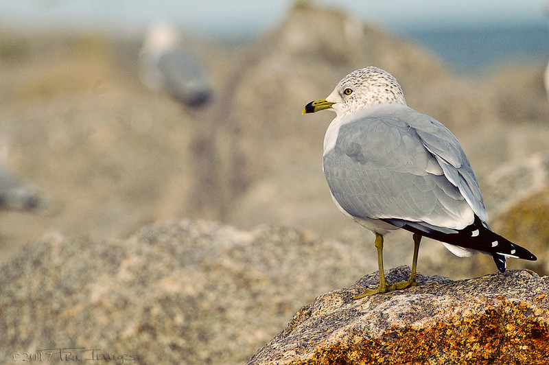 Seagull Thoughts...