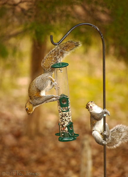 Hey, that's my feeder!