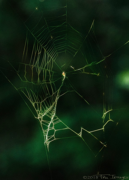 W is for Web