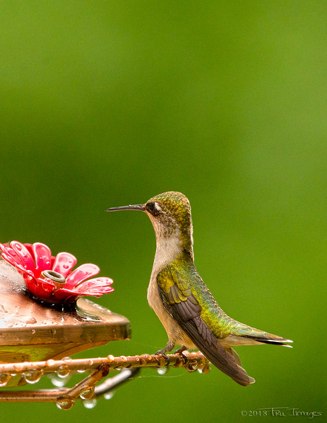 H is for Hungry Hummer!