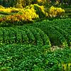 Artistic Agriculture