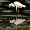 Egret's Reflection