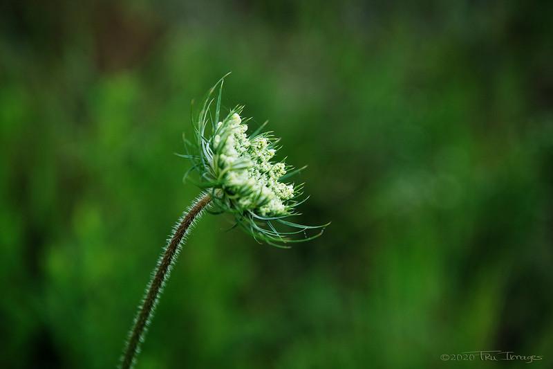Flower in Progress - by TruImages