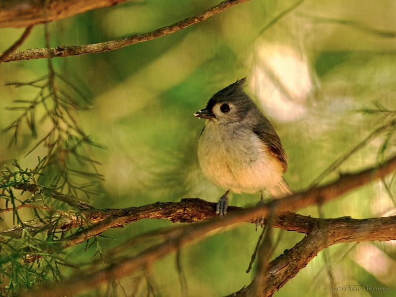 Greedy Bird -by TruImages