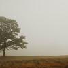 The Lone Tree