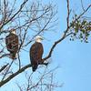 Call Sign: Eagle 1, Eagle 2