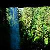 Dead tree at North Falls, Silver Falls State Park, Oregon