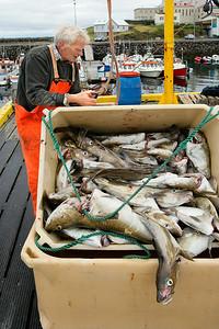 Commercial Fisherman, Stykkisholmur