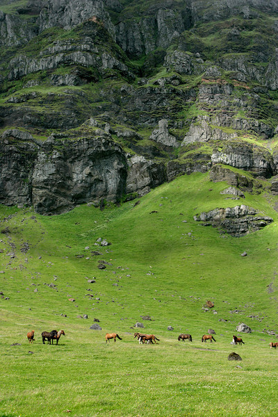 Icelandic Horses Pasturing Below Towering Cliffs