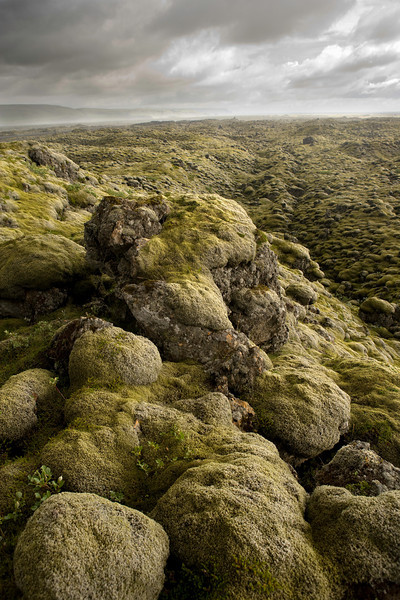 Ancient Lava Field Covered with Moss on the Southern Coast
