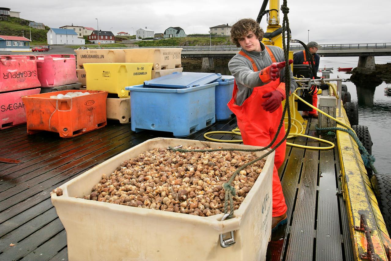 Marine Snail Harvest, Stykkisholmer